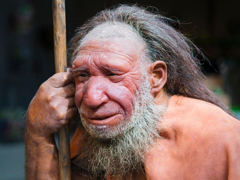 science facts neanderthal
