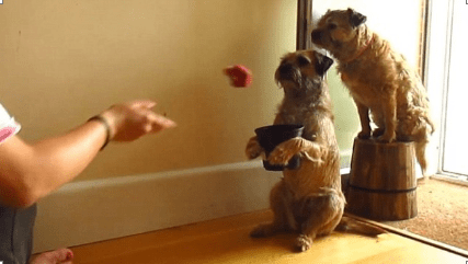 Use a pot as a basketball net and try to get the ball in. The image below shows this with dogs, but you get the idea