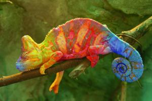 chameleon_blog