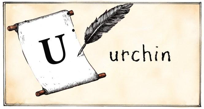 U- urchin
