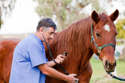 become an equine veterinarian