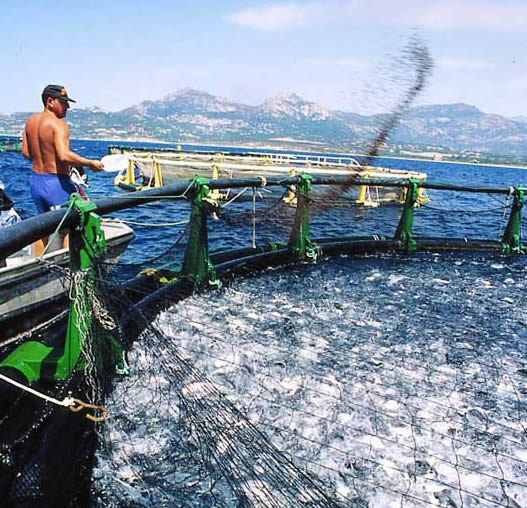overview of aquaculture online degree program