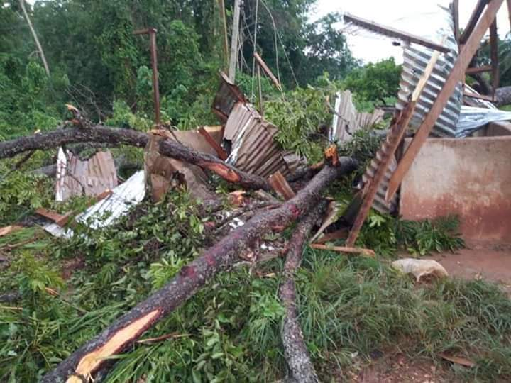 JUST IN: 35-year-old teacher killed by falling tree at Denkyira Motiakrom 2