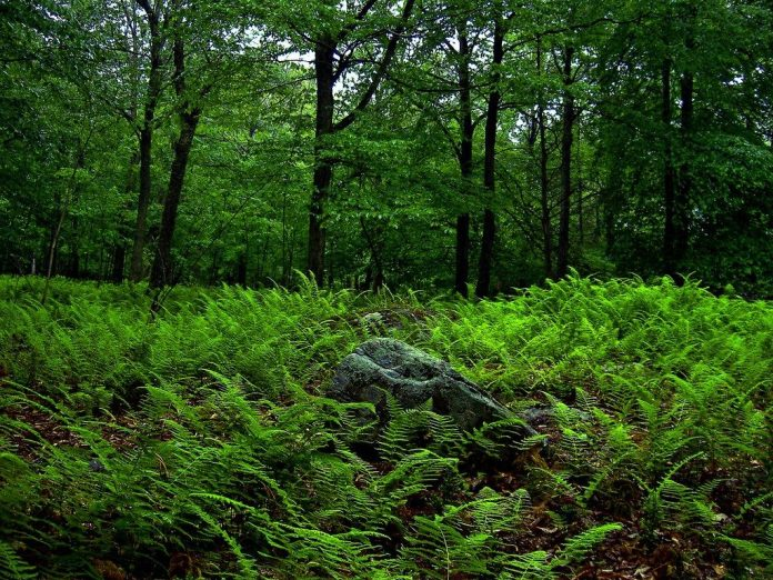 Equatorial Evergreen Forest