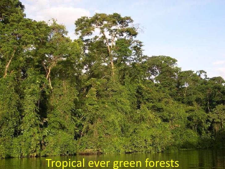 tropical desert forest