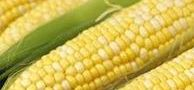 [recipe] CORN – at The Easiest Way