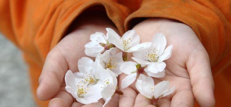 Semua orang mencari bunga ini untuk berpose..