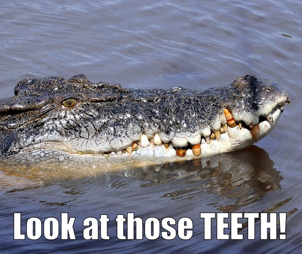 Crocs in Darwin