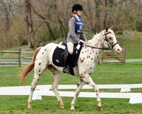 Le contact est moelleux, le cheval prend la position d'encolure qui lui convient le mieux