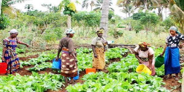 Fertilizer Subsidy Grant