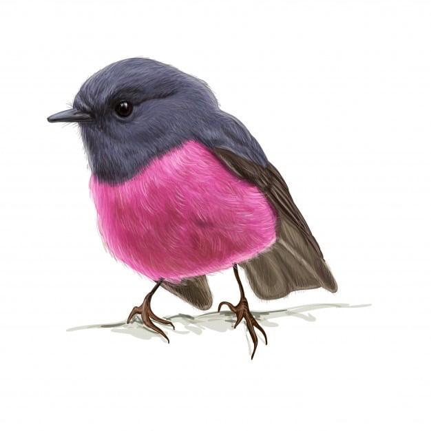 Ptaszek dla Taty