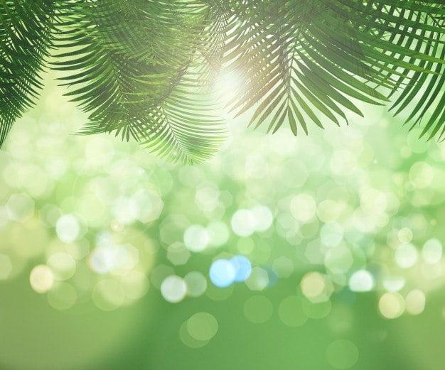 Niedziela palmowa Agata Dziechciarczyk Wielkanoc (Wierszyki) Wierszyki
