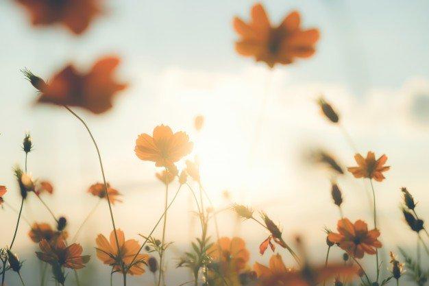 Wiosna Agata Dziechciarczyk Wierszyki Wiosna (Wierszyki)