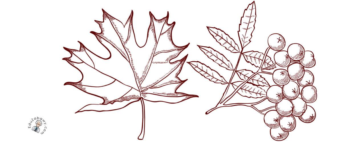 Kolorowanki: Dary jesieni