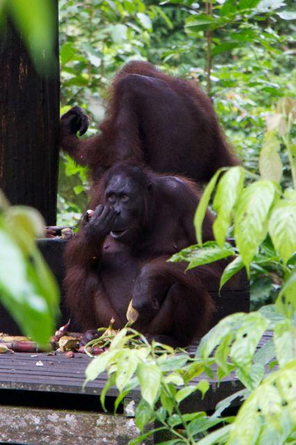 Family Travel Borneo