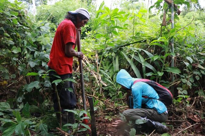Hannah and Walter planting a chihuahuaco