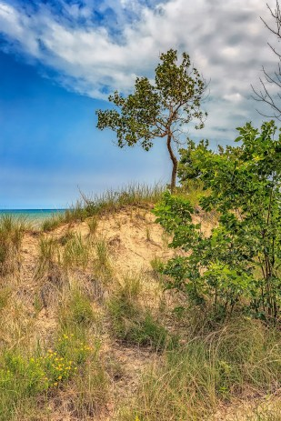 Dune Bluff