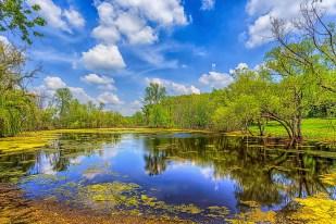 Farm Pond in June