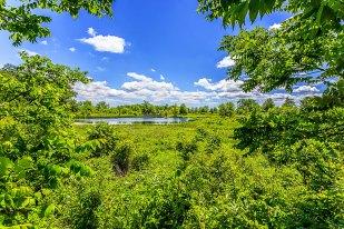 Pond Seen Through Trees
