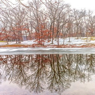 Reflection of Trees in Early December