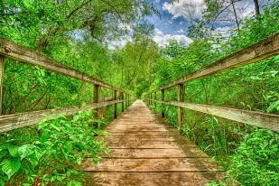 Trail Bridge at End of Summer