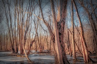 Winter Morning in Swamp Forest