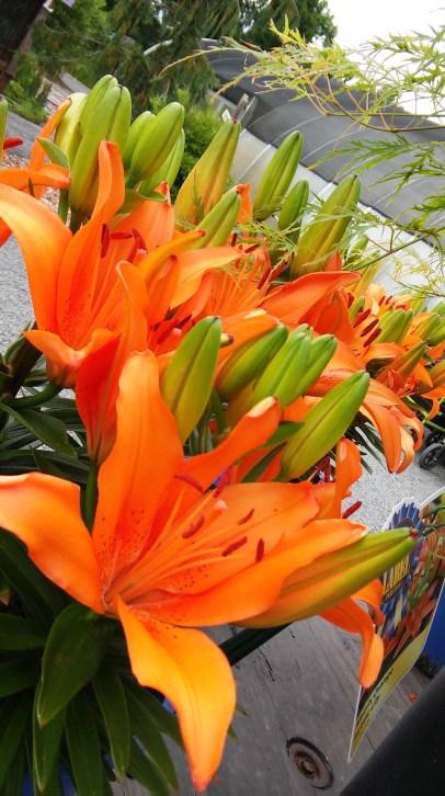 Flowers at Edward's Garden Center