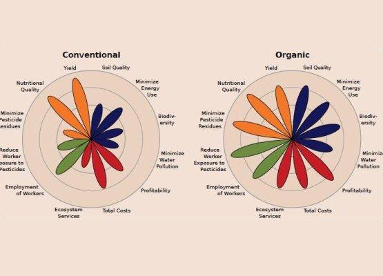 correlazione-tra-alimenti-bio-e-cancro-dottoressa-edy-virgili