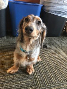 picture of a dog