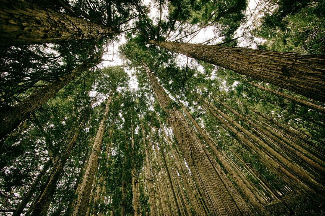 On Care for Our Common Home: 6 Sessions on Laudato Si –  Sept. 21 – Oct 26
