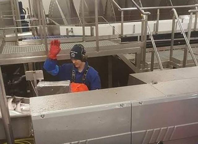 Soomlasi meelitatakse Norra kalatehasesse 3200-eurose kuupalgaga