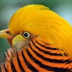 KUUM: Soomes on avastatud eriti ohtlik linnugripp, kaalutakse liikumispiiranguid