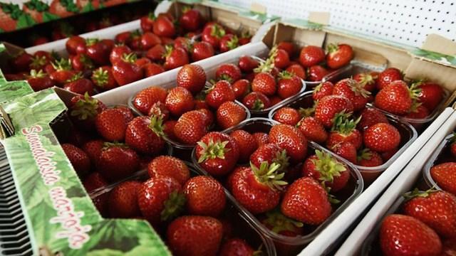 Ametivõimud korraldasid üllatusreidi Soome maasikataludesse, üks neist tegutses täiesti mustalt