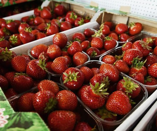 Soomes välja töötatud meetod aitab eristada Soome maasikaid Eesti omadest