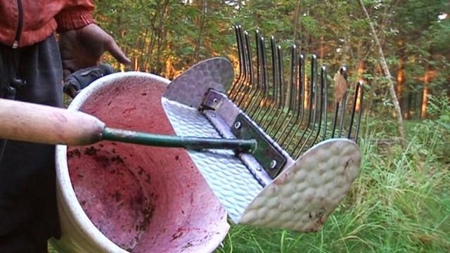 Soomes piiratakse marjakorjajate tulekut teatud riikidest