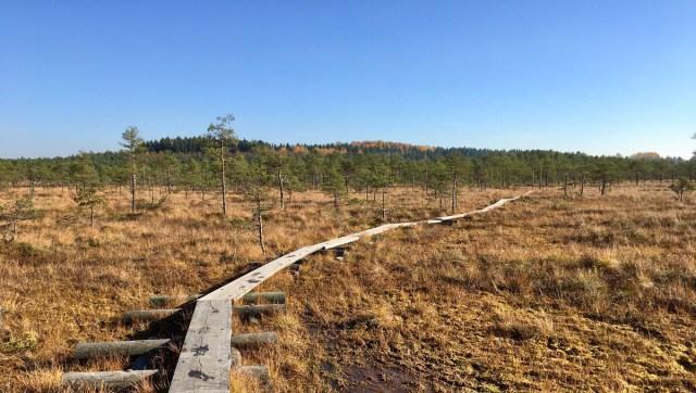 Soomes tehti sood kraavidega kuivendades suur viga, mille parandamine võtab sadu aastaid