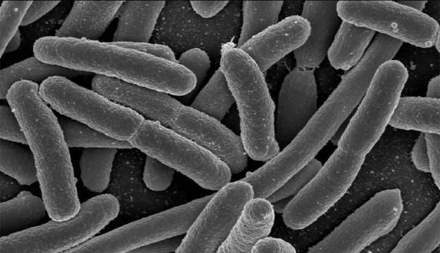 Soome sotside juht võis tuua Hispaaniast kaasa ohtliku bakteri