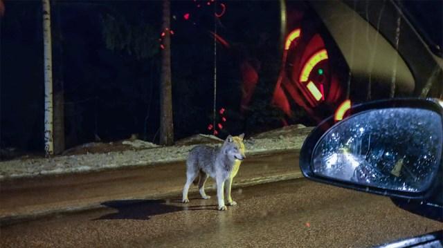 ERAKORDNE JULGUS: Hunt seisis Soomes autodel tee peal ees ja ei läinud ära