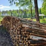 Venemaa keelab töötlemata puidu ekspordi, mõjutab ka Soomet