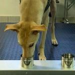 Helsingi-Vantaa koroonakoerad on leidnud esimesed nakatunud