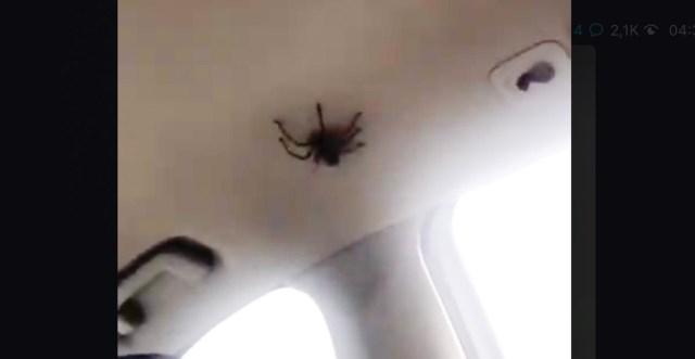 Kõhe video: autos avastati sõidu ajal ämblik (NB! Nõrganärvilistele mittesoovitav!)