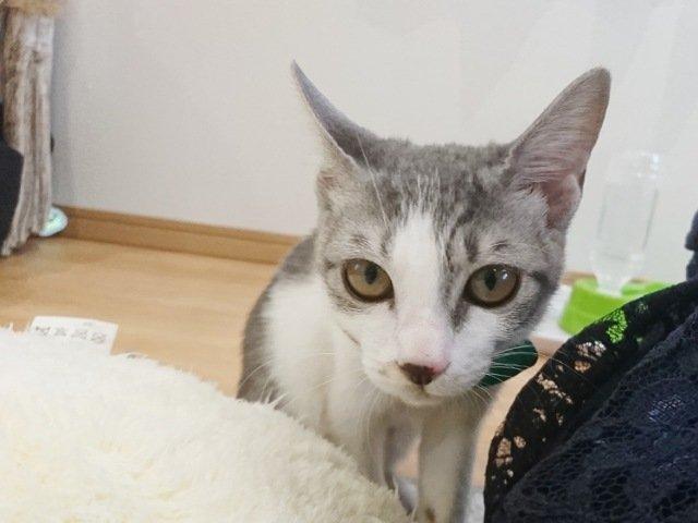 にゃんこメリー:猫3