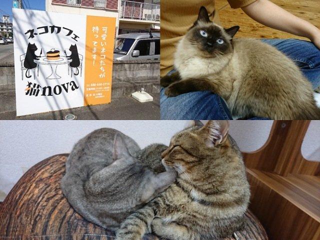 ネコカフェ猫nova-猫好きなら絶対に1度は行ってほしいお店!
