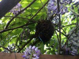 Willow Vale swarm