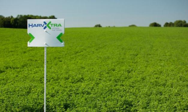 Argentina approves first GMO alfalfa