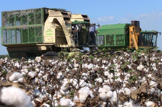The revenge of cotton: a new boom of exports