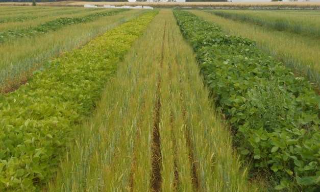Rizobacter' inoculant arrives to Scottish soybean production