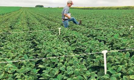 GMO soybeans green-lighted by China, already approved in Argentina. But, what will seed companies do?