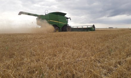 The Argentine wheat harvest would be record with 21 million tons