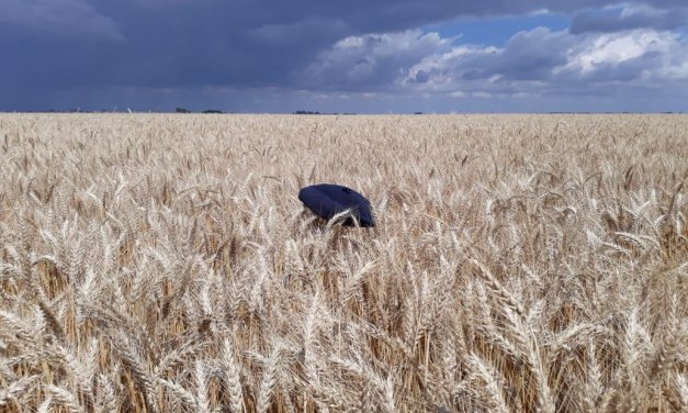 Argentine wheat area would be 6.7 million hectares